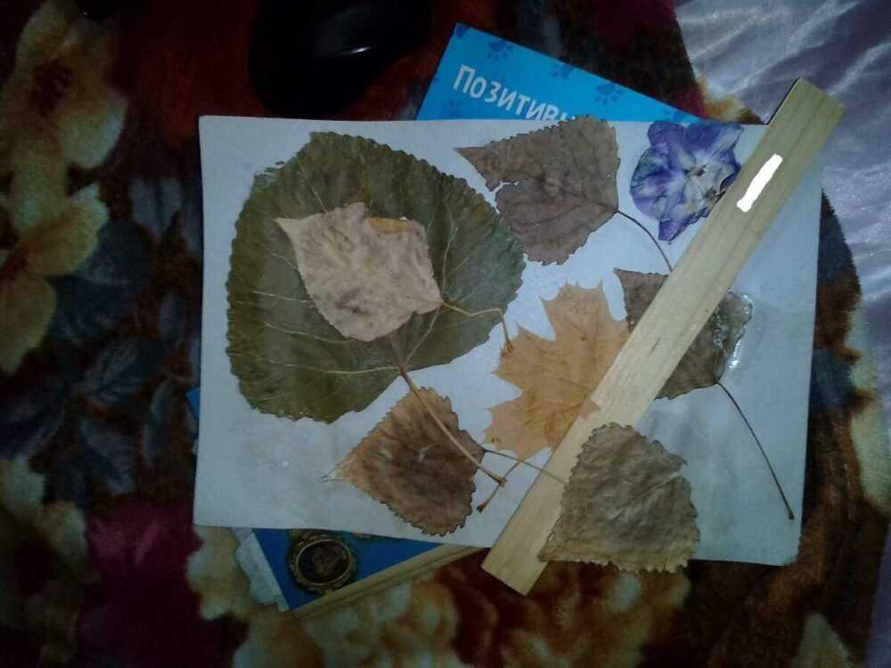 Хитрость с осенними листьями, которая поможет делать поделки без всякого мусора